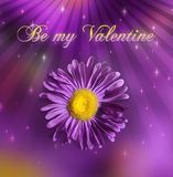 St. Valentine's Day stock photos
