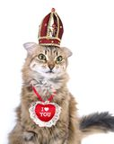 St Valentine's Day cat Royalty Free Stock Photography