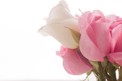 St.Valentines Pink and white roses Royalty Free Stock Photo