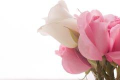 St.Valentines rosafarbene und weiße Rosen Lizenzfreies Stockfoto