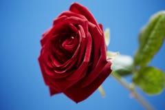 St.-Valentinsgrüße stiegen Stockbild