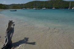 St velho Vincent Grenadines de Caribbian da ?rvore da madeira lan?ada ? costa foto de stock royalty free