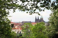 St. Vitus Cathedral in Prague Stock Image