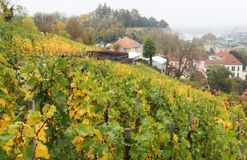 St Wenceslas Vineyard au château de Prague Photographie stock libre de droits