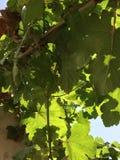 Stać pod treein jaskrawym światłem słonecznym Obrazy Royalty Free