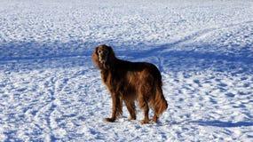 Stać w śniegu obraz stock