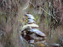 Stać w kolejce żółwie zdjęcie stock