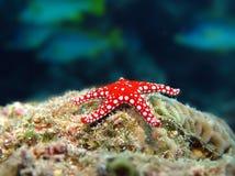 sta моря ghardaqa Стоковое Изображение RF