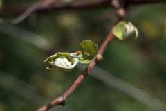 Staaftak met kleine bladeren Royalty-vrije Stock Foto