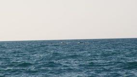 Staart en vin van een walvis op gezicht stock videobeelden