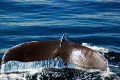 Staart van een walvis stock afbeeldingen