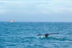 Staart van walvis in overzees op achtergrond van schip met toeristen ijsland stock foto