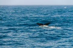 Staartvin van een duik zuidelijke juiste walvis stock fotografie