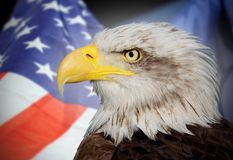 Weißkopfseeadler und USA Lizenzfreie Stockfotos