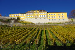 Staatsweingut Meersburg. Vineyard, Lake Konstanz, Baden-Württemberg stock images