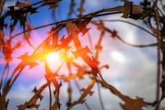 Stabbing sharp fence on blurred  background at sunset Stock Photos