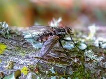 Stabiele vlieg die zich op een boomtak bevinden stock fotografie