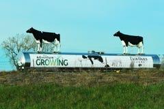 Stabilimento lattiero-caseario Fotografie Stock