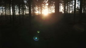 Stabilized tracking shot of sunlight at sunset or sunrise flaring through the trees in a dark forest stock footage