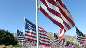 Stabilized Walkthrough Hundreds of American Flags (Part #3) stock video footage