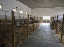 Stabilt stallkvarter för gammal tom häst i den historiska lantgården Benice royaltyfria bilder