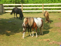 Stable photo stock