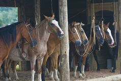 Stable. Horses in a stable in the countryside of Uruguay Royalty Free Stock Photos