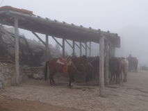 STABLE OF THE ANDES Stock Photos