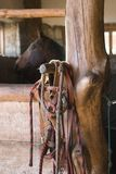 Stable box with horse harness. And horse haed in background Royalty Free Stock Photography