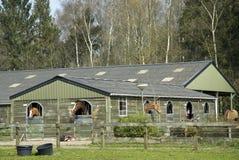stable för hästridningskola Royaltyfri Bild