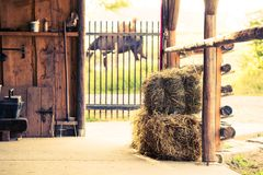 Stable Hay Cubes Royalty Free Stock Image