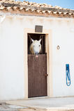 Stable with horse. Royalty Free Stock Image