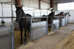 Stable with horses. In a farm Stock Photos