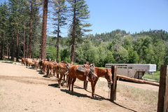 Stable horses Royalty Free Stock Photos