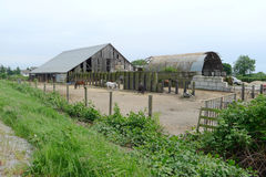 Stable with Many Horses Stock Image