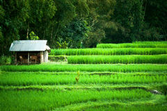 Stable in the Meadow. At Bali Indonesia Stock Photos