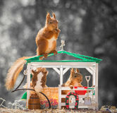 The stable. Red squirrels standing with a horse on and in a stable Stock Photos