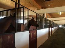 In the stable at Terkonzavod royalty free stock images