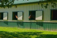 stabled лошади Стоковая Фотография RF