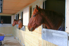 Stabled Horses Royalty Free Stock Image