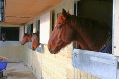 stabled hästar Royaltyfri Bild