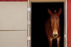 Stabled Pferd lizenzfreie stockbilder