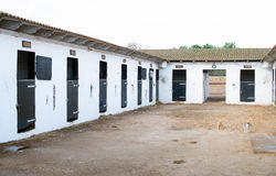 Stables with horses. Stock Photo