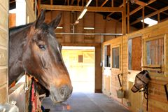 At the stables Stock Image