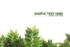 Stachelbeerblattrahmen mit Isolathintergrund Lizenzfreie Stockfotografie