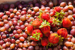 Stachelbeeren und Erdbeeren im Korb Stockfoto