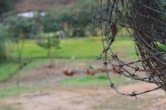 Stacheldrähte auf einem Bauernhof stockfotografie