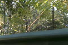 Stacheldraht auf einem grünen Zaun Lizenzfreies Stockbild