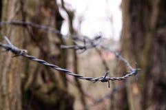 Stacheldraht im Wald Stockfotografie