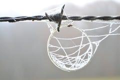Stacheldraht mit dem bereiften Haar und bereiftem Spinnennetz Lizenzfreies Stockfoto